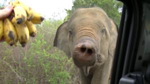 elefant-2